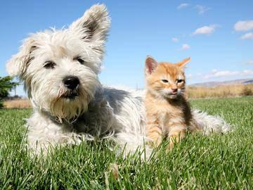 Pet Friendly - Ridgeview at Garden Mills - Prattville, AL