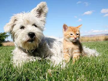 Pet Friendly - Summit Terrace - Prattville, AL