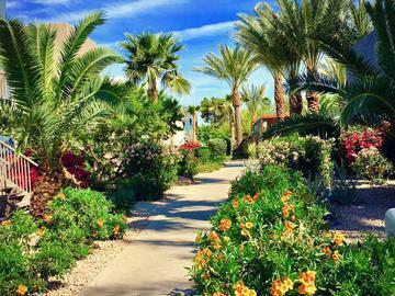 Lush Landscaping - Level 550 - Mesa, AZ