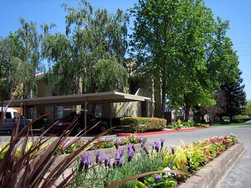 Lush Landscaping - Summerview - Modesto, CA