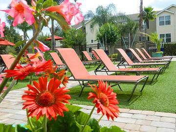 Poolside Loungers - Ashton Chase - Clermont, FL