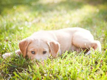 Pet Friendly - The Laurels Apartment Homes - Fort Myers, FL