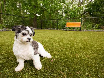 Dog Park - Somerset Palms - Naples, FL