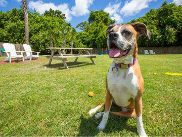 Dog Park - The Pavilions at Monterey - Palm Bay, FL