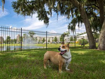 Dog Park - Preserve at Alafia - Riverview, FL