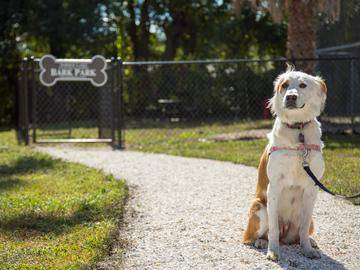Pet Friendly - Lanier Landing - Brunswick, GA