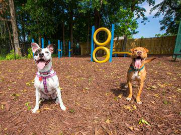 Dog Park - Southern Downs - Statesboro, GA